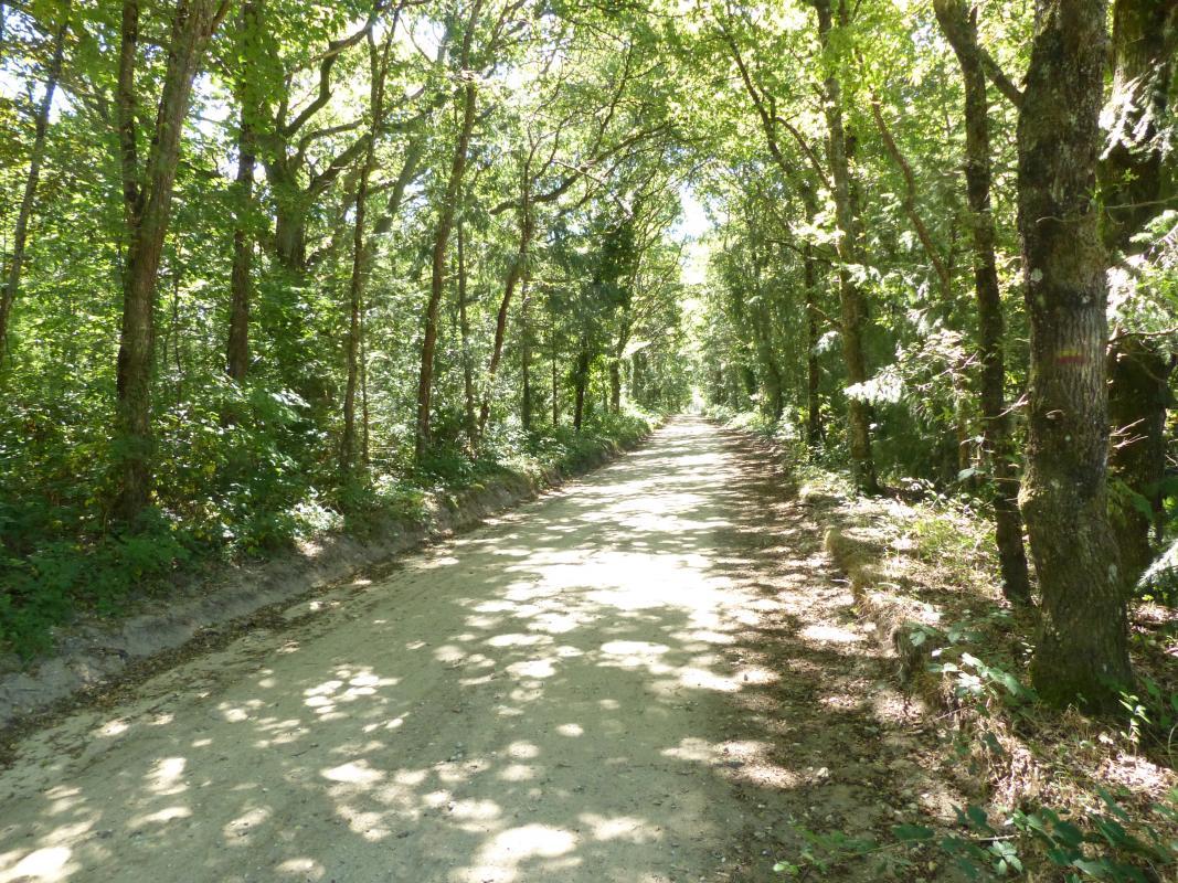 Chemin des Mahins