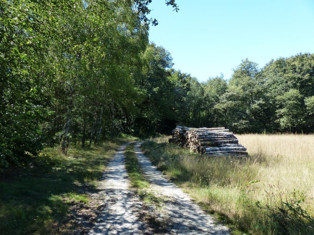 Chemin des Réaux à Granvau