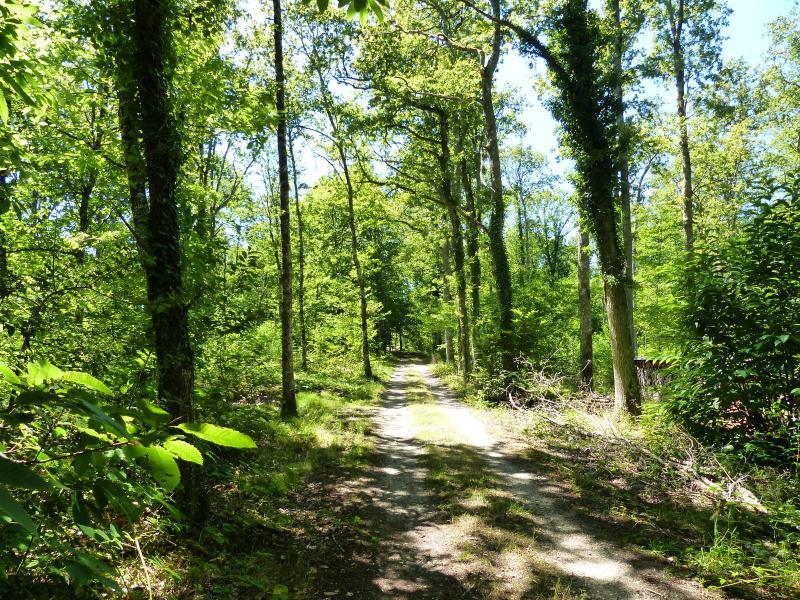 Chemin des Réaux à Granvau dans les bois
